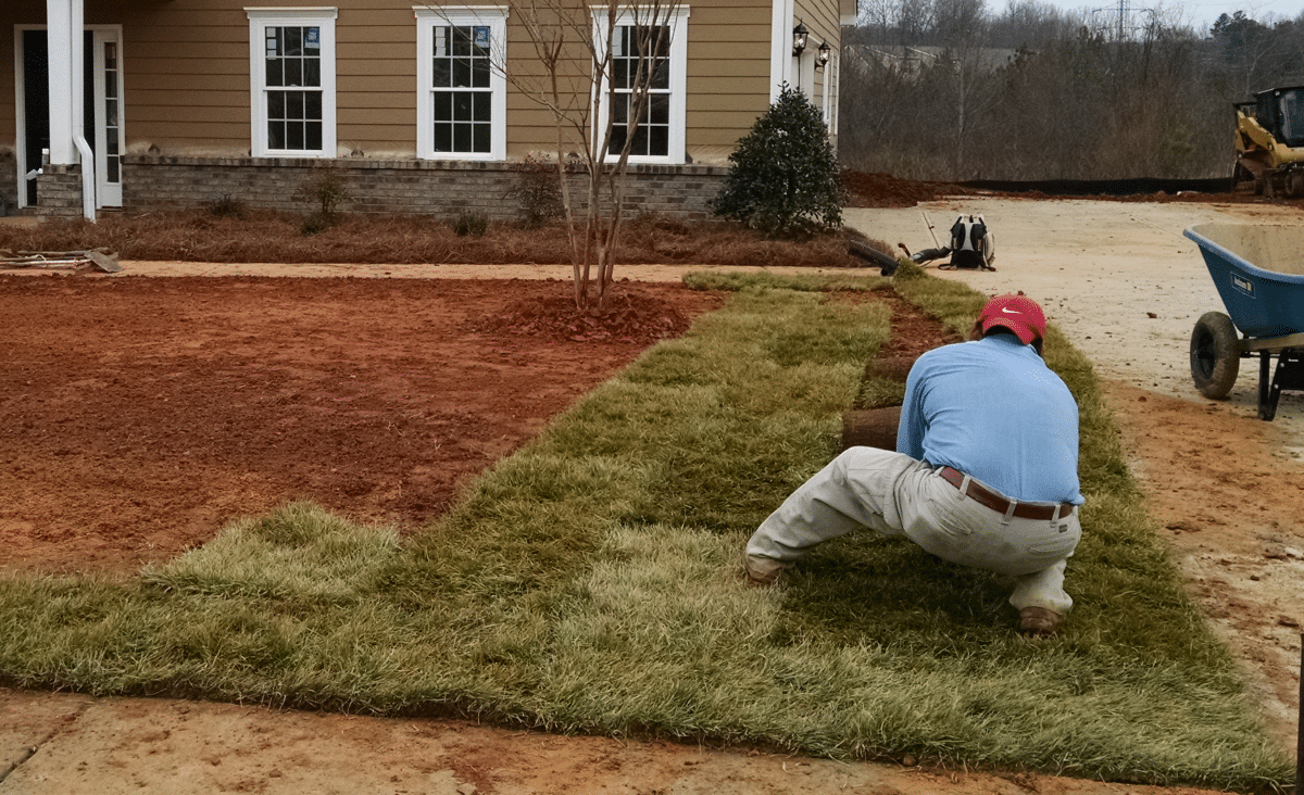 Planting Over a Septic Tank and Drain Field