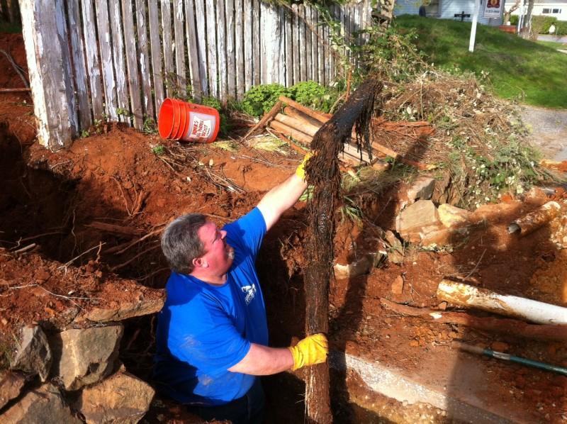 Getting Rid Of Tree Roots In A Sewer Line