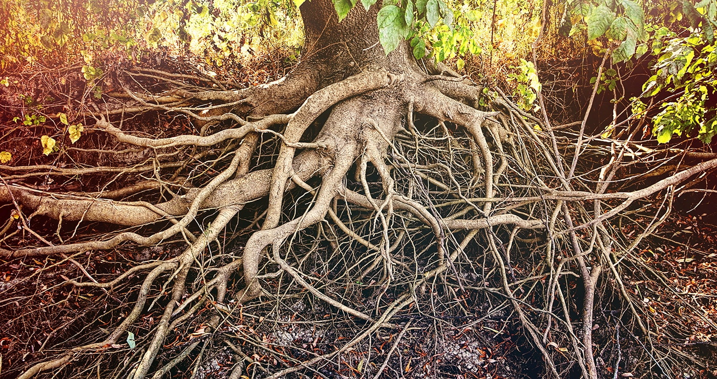 Tree roots can harm sand mound systems